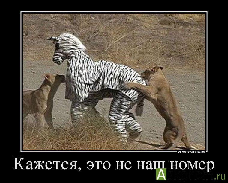 МОРФЕЙ N60 ТАБЛ, фото 2
