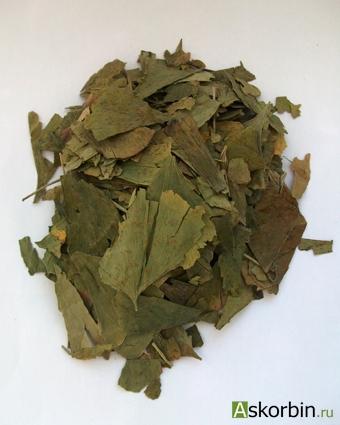 гинкго билоба лист 25,0., фото 3